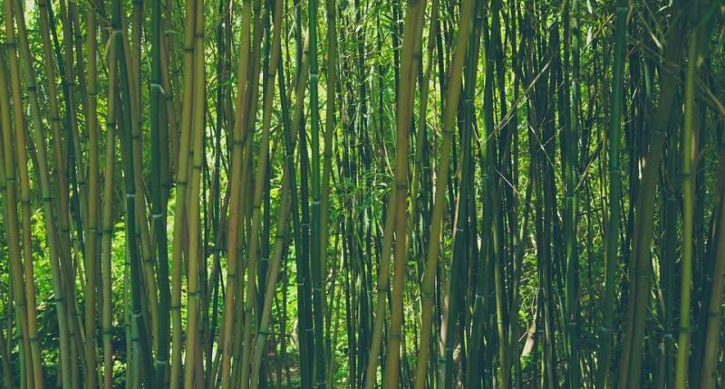 Schreibtisch Organizer aus Bambus